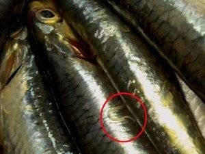 Difendersi da Anisakis nel pesce crudo