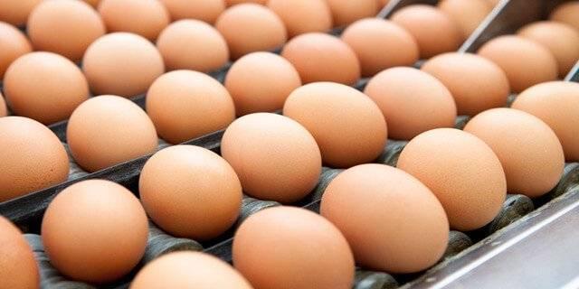 Contaminazione delle uova